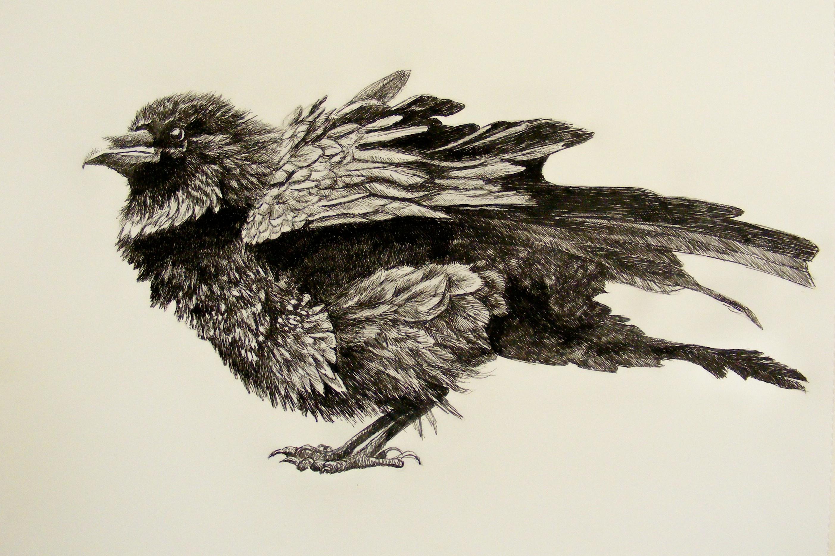 Patrick Tillett: Weekend Reflections - Gulls Ruffled Feathers